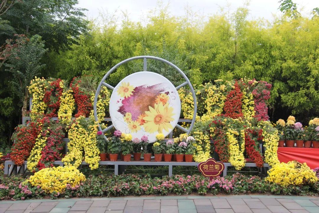 明日重阳节 一起去登高赏菊吧