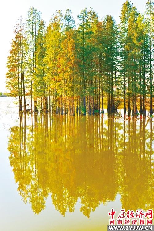 秋风吹靓淮南湿地