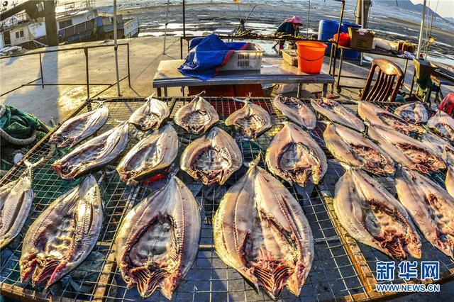 山东青岛:渔村冬晒忙鱼干飘鲜香