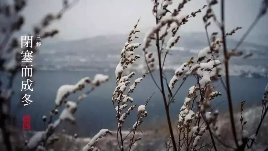 今日小雪 | 愿你初心如雪,温暖常伴