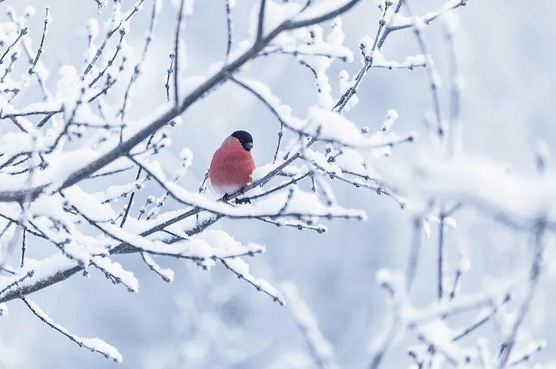夜读 | 小雪:花雪随风不厌看,一片飞来一片寒