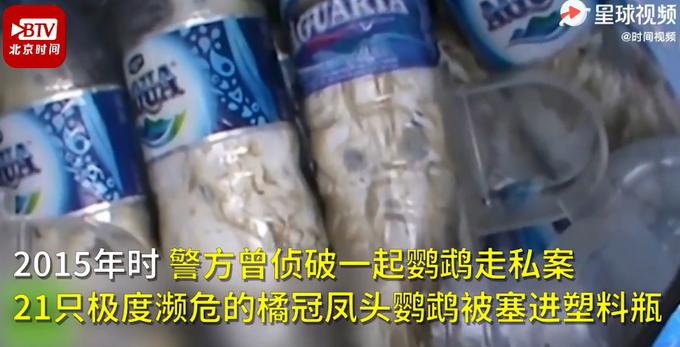 可怕!印尼74只珍稀鹦鹉被塞进塑料瓶走私,残忍画面网友直呼心疼