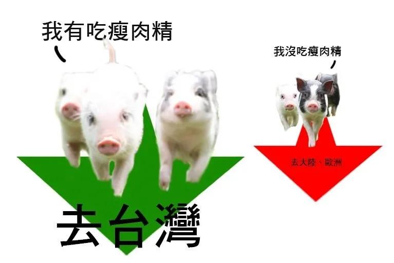"""这头""""猪"""",把台湾搅翻了天"""