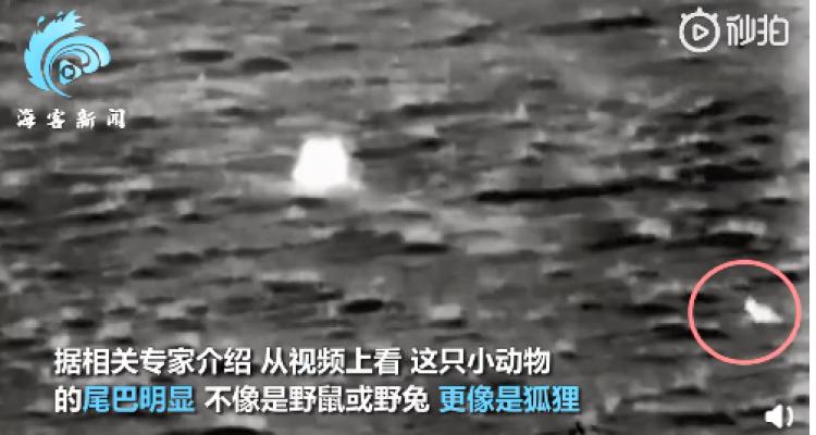 全民猜猜猜!抢镜嫦五返回器的是什么小动物?网友:这是嫦娥带回了玉兔