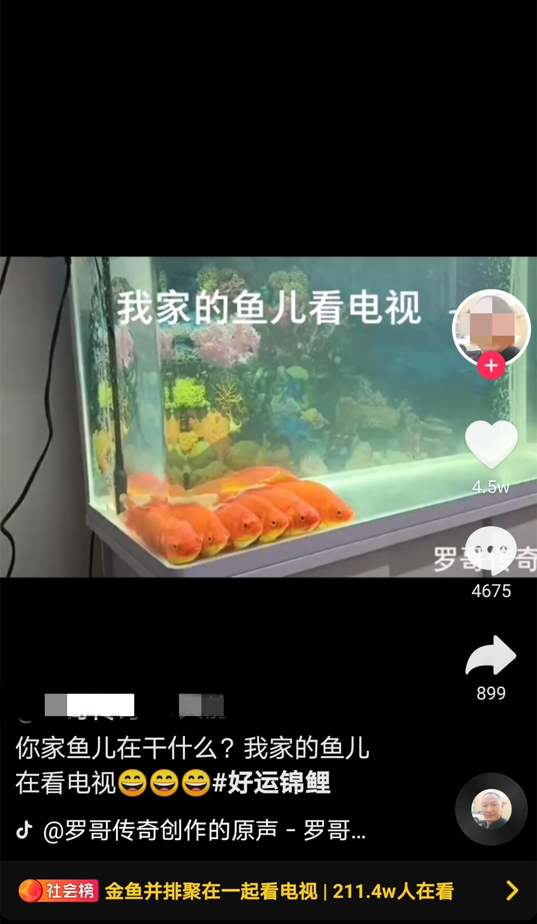 """男子回家,发现6条金鱼正并排看电视!网友:放""""舌尖上的中国之糖醋鱼"""""""