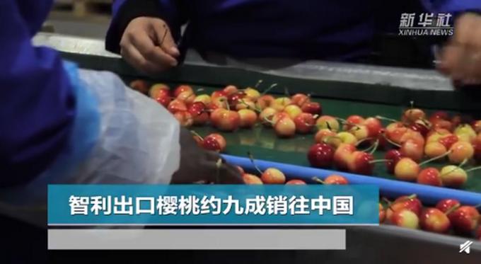 智利90%以上的樱桃出口销往中国,超过32万吨
