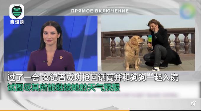 """俄罗斯一记者播报时被狗狗抢走话筒,突然上演追狗""""大战"""""""