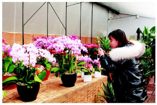 """线上线下,王健和他的""""花卉大观园"""""""