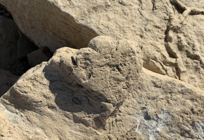 古生物学家发现一个跟猫一样大小的恐龙足迹-第2张图片-IT新视野