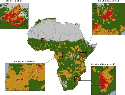研究显示非洲大象的实际栖息地范围已经缩小到原来的17%-第3张图片-IT新视野
