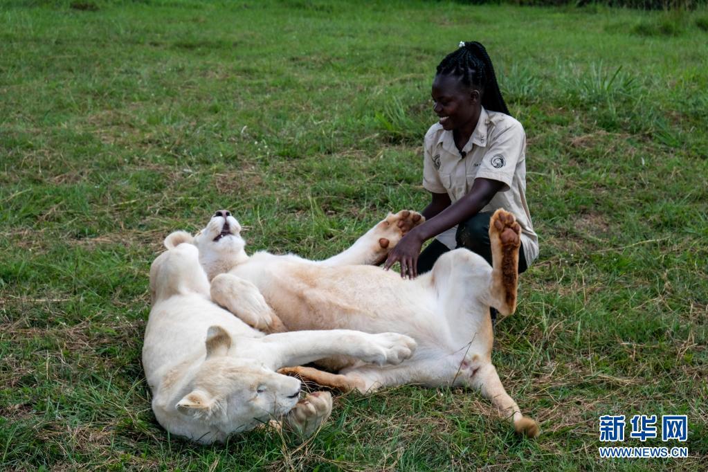 <a href=https://m.kgongcn.com target=_blank class=infotextkey>乌干达</a>青年倡导人类与<a href=https://m.kgongcn.com target=_blank class=infotextkey>野生动物</a>和谐相处