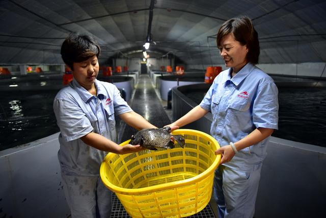 水產養殖業醞釀新標,地方有望出臺多項經濟激勵政策