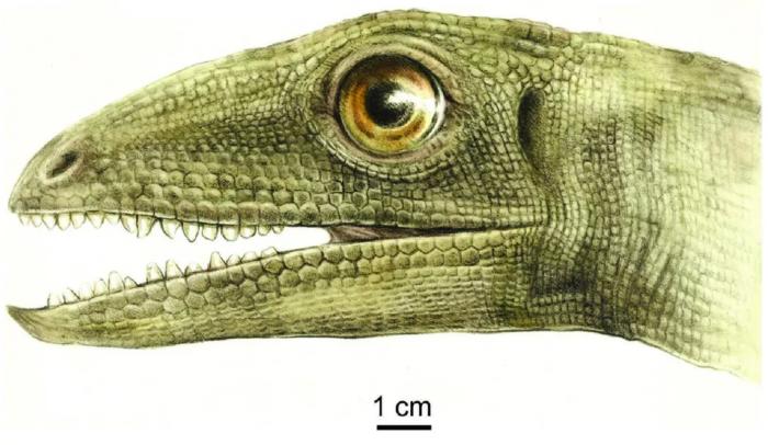 科学家在恐龙祖先的粪便中发现2.3亿年前完整甲虫-第2张图片-IT新视野