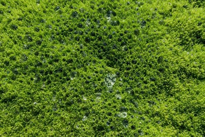 研究发现4亿年前陆地植物的出现改变了地球的气候控制体系-第1张图片-IT新视野