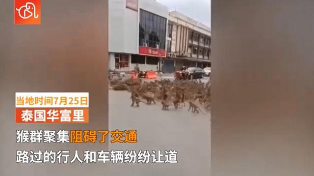 大场面!泰国两大群猴子聚集在路口 造成交通堵塞