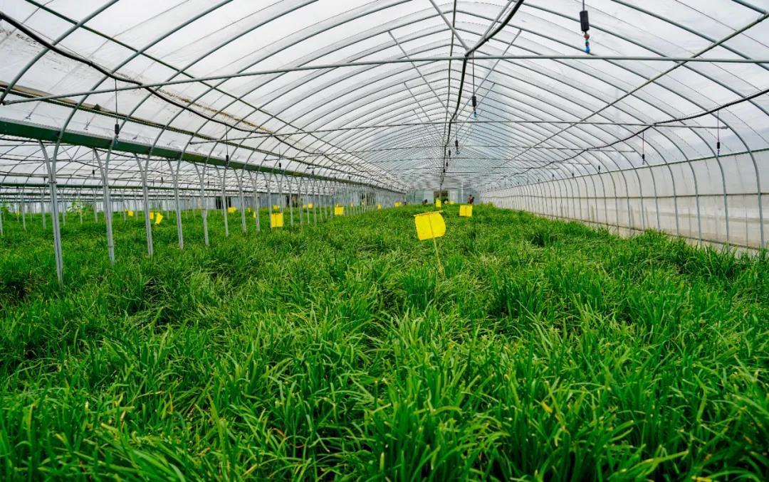 单品种植,菜渔循环,小韭菜种出大产业