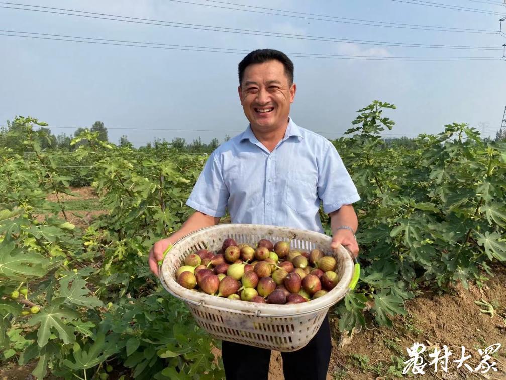 能卖鲜果还能做果茶果酒,多元模式让这个无花果农场日进万元