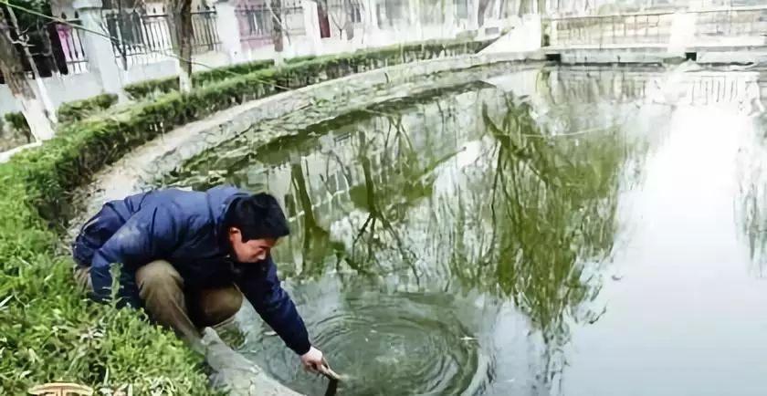 淺析魚病防治的合理用藥: