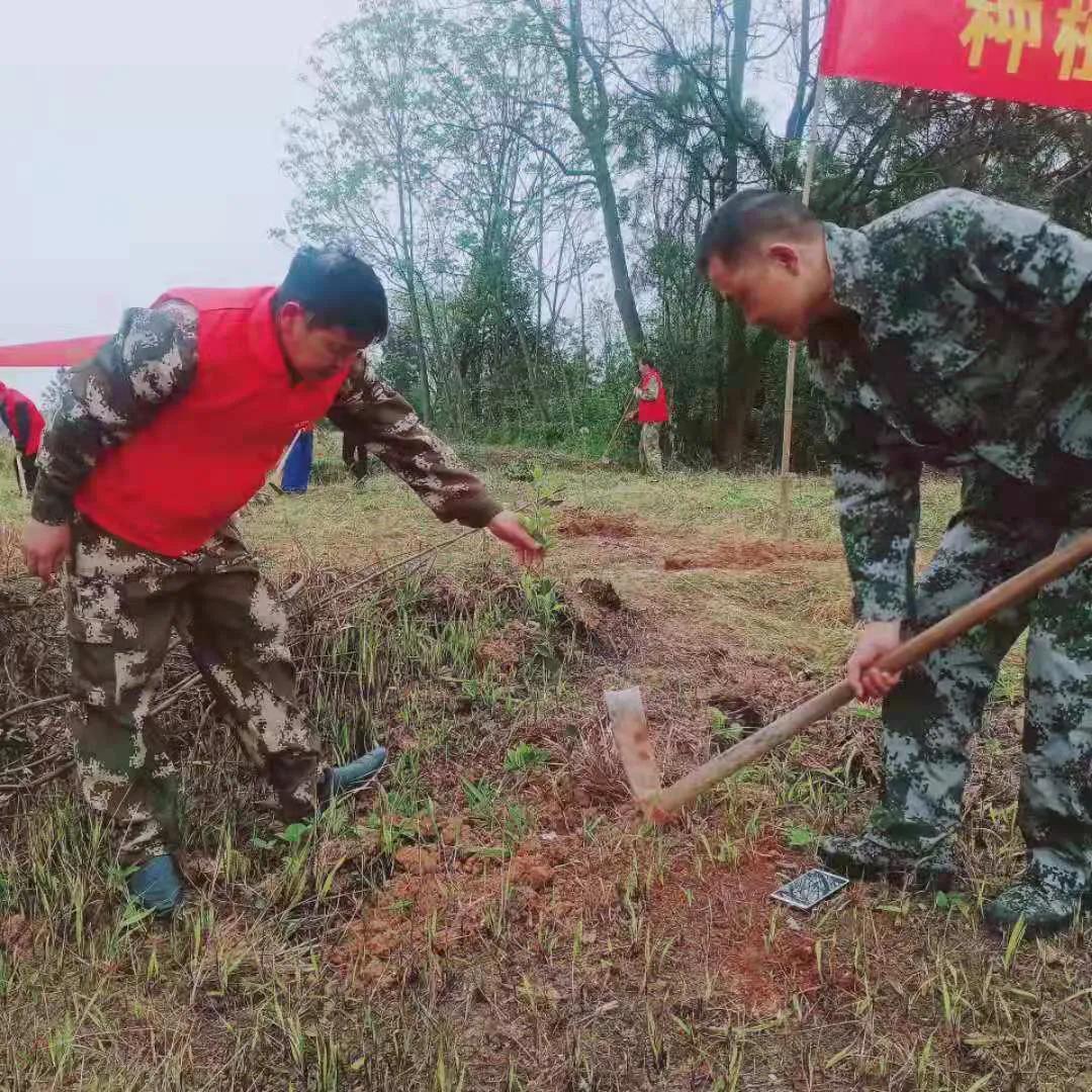 邵阳县谷洲镇:乡村振兴号角响, 油茶栽遍满山岗