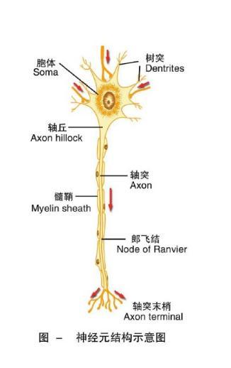 医生大白话:一文读懂胶质母细胞瘤