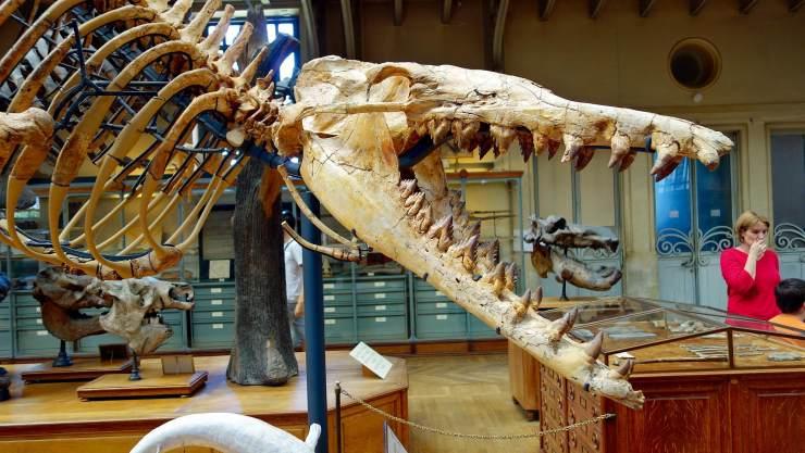龙王鲸的身体结构照片,龙王鲸仿真图片03