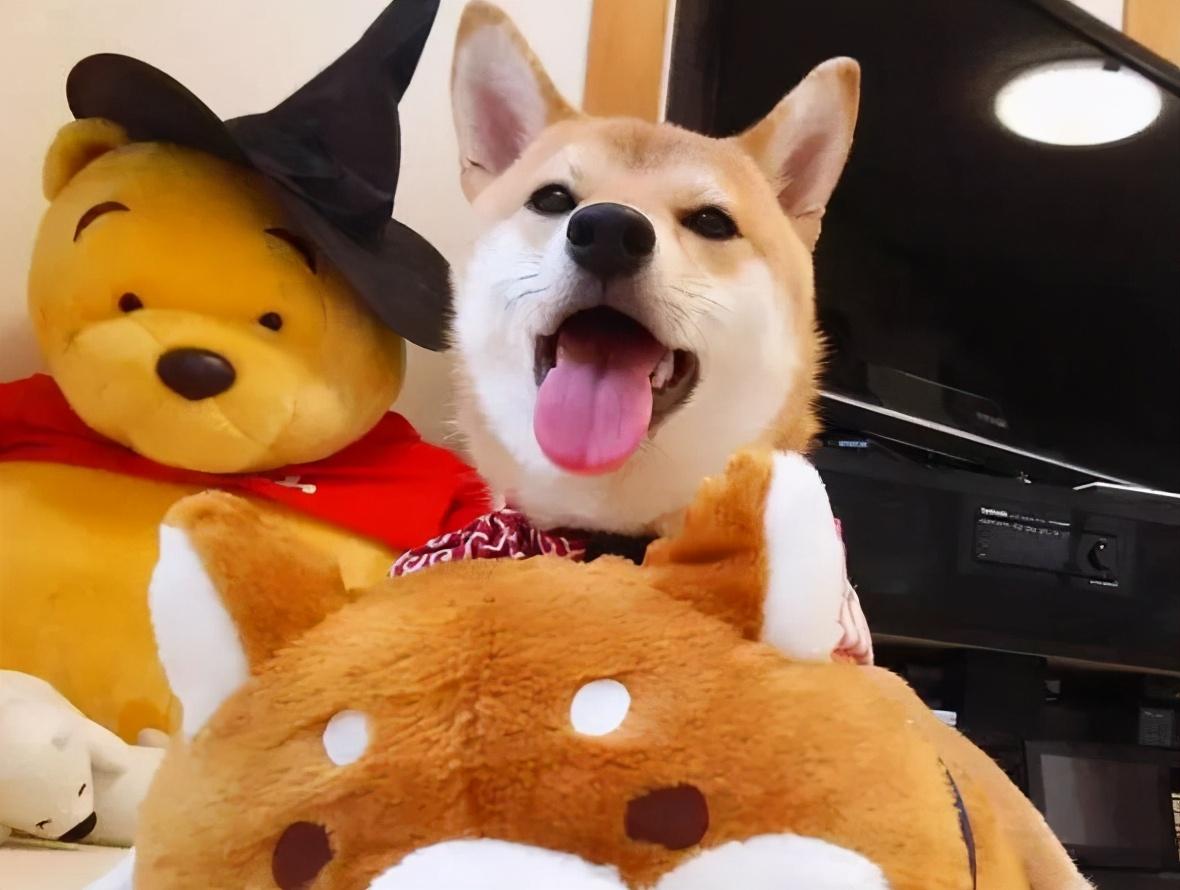 如果你家狗有这5种行为,说明它过得很幸福,也很爱你