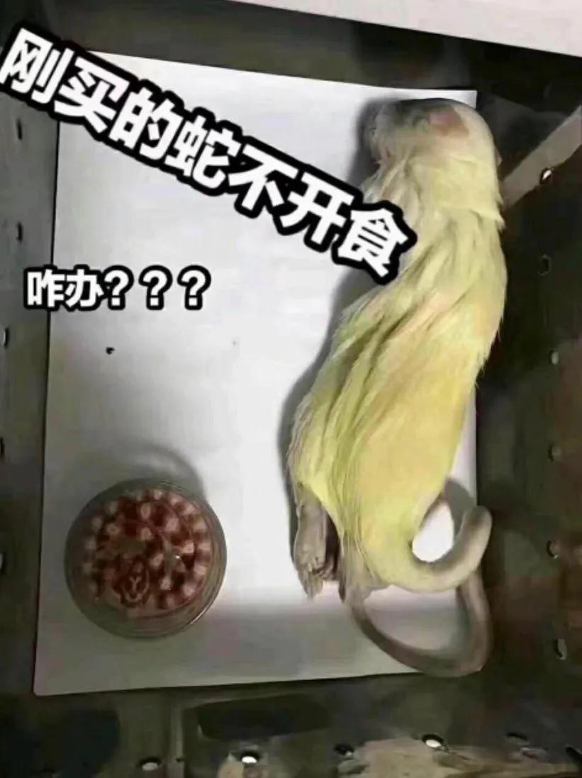 蛇苗不开食 难道只能填?且慢