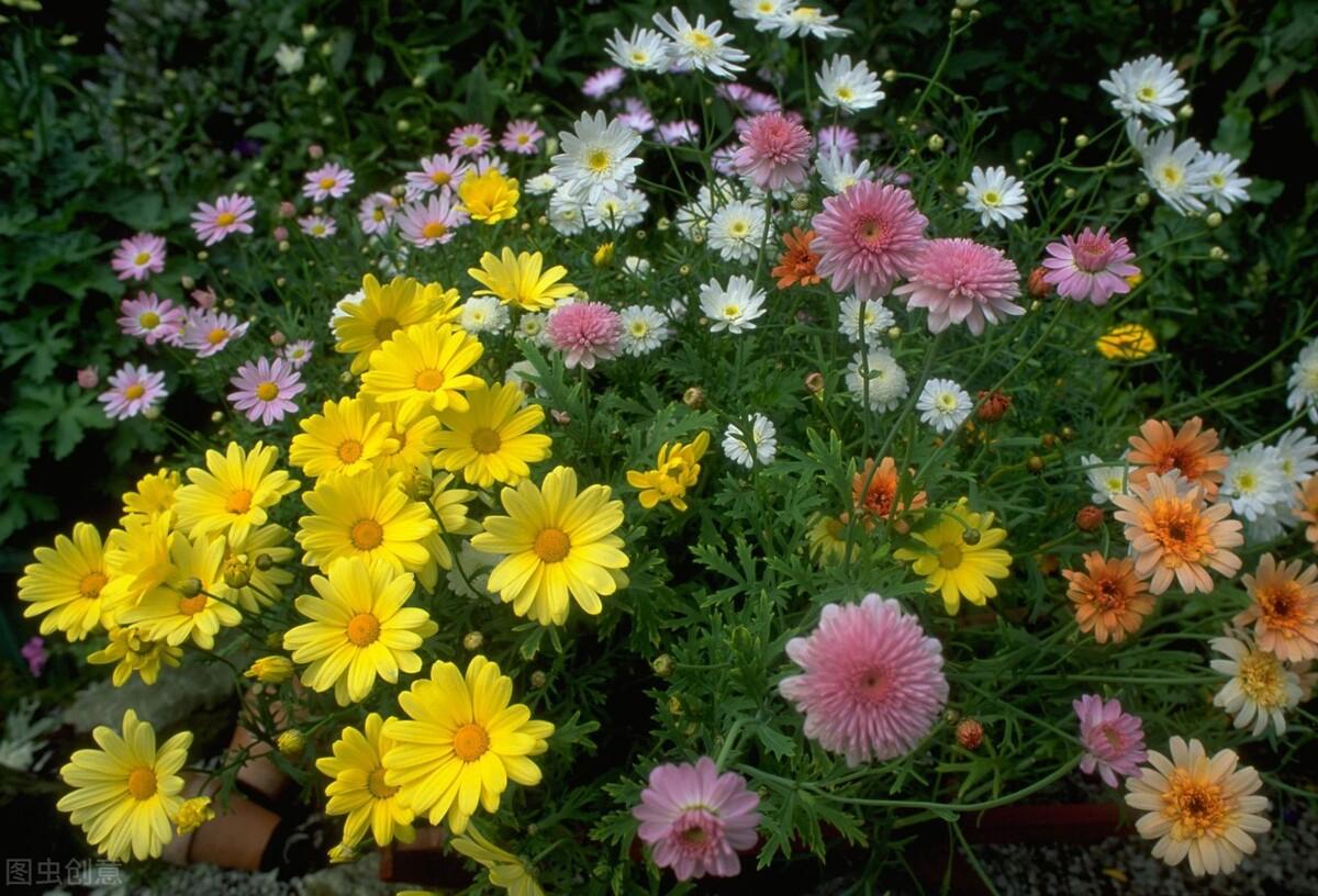 两季相交忙插花!扦插花草的最佳时间到来,20个品种扦插起来 扦插花草 第3张