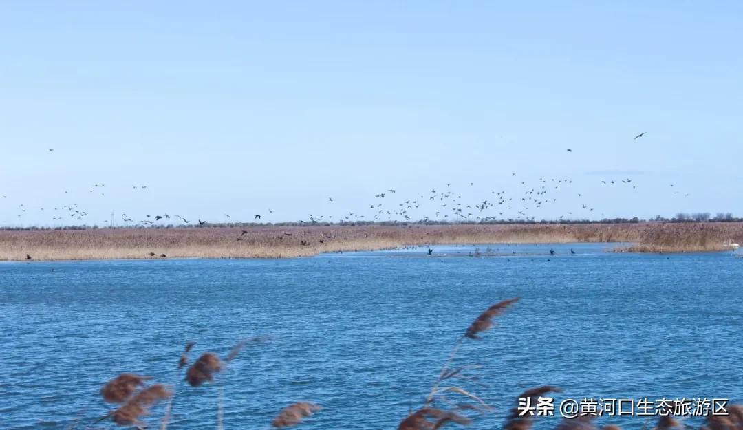 【黄河口生态旅游区】观鸟秘境 愉悦心境