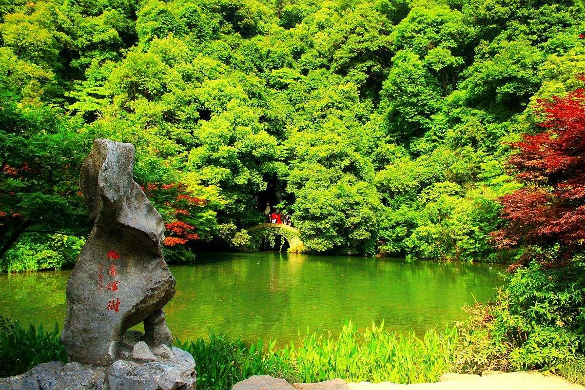 浙江又一景区火了,森林覆盖率高达93.5%,空气清新美景如画