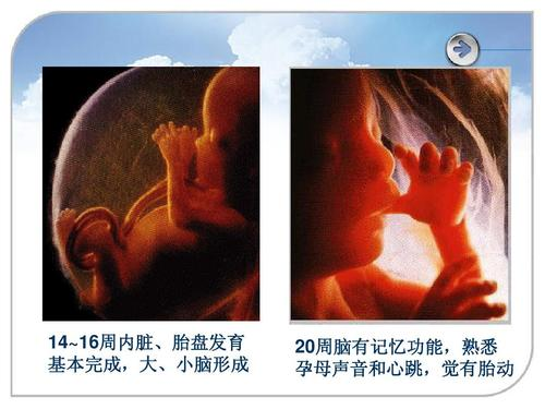 孕中期常吃这三类食物,有利宝宝大脑发育,孕妇自己也有好处