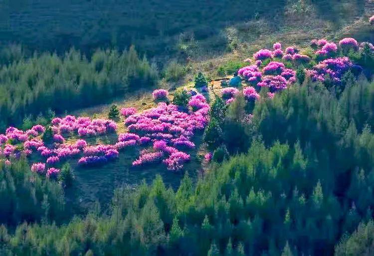 黑土湿地之都双鸭山 | 万紫千红总是春