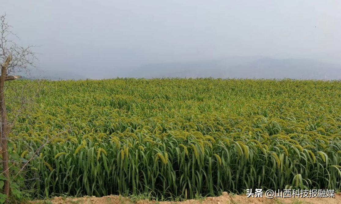 垣曲县:解峪乡土地托管促进农业增效 、农民增收走上致富路