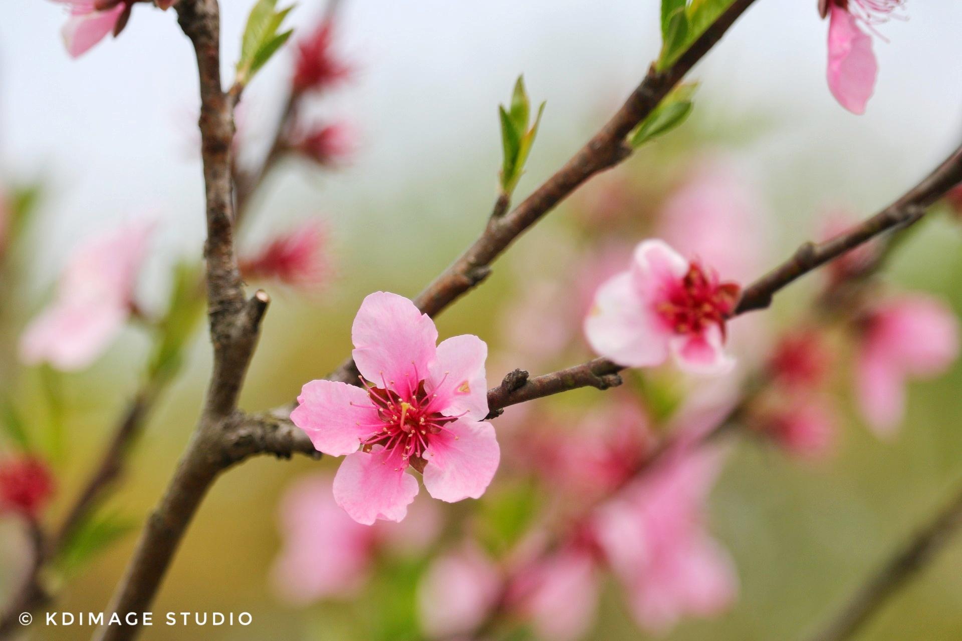 春天花会开,收好这10个踏春赏花推荐,马上开启春季花之旅
