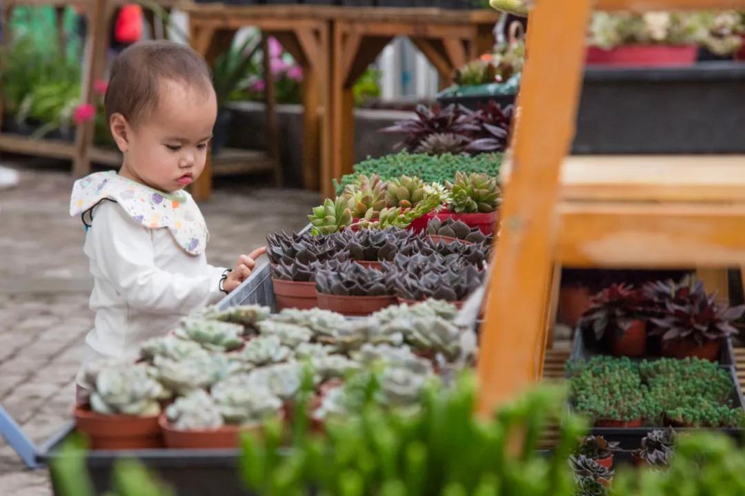 「百花盛会」油菜花开遍地黄!请收下这份来自春天的礼物
