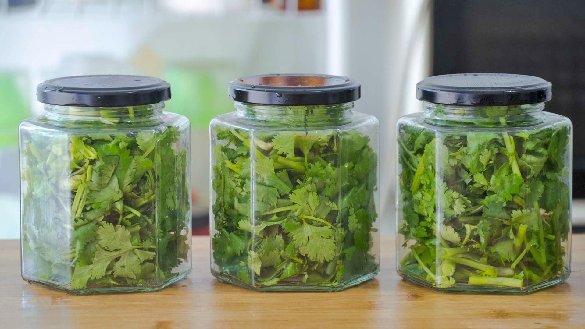 香菜保存有訣竅,3種儲存方法,隨吃隨取,不發黃不腐爛,去試試