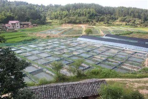 中国水、海产消费需求巨大,水产养殖面临诸多挑战