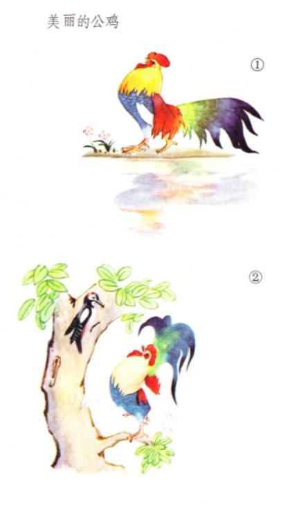 美丽的公鸡-小学语文课文