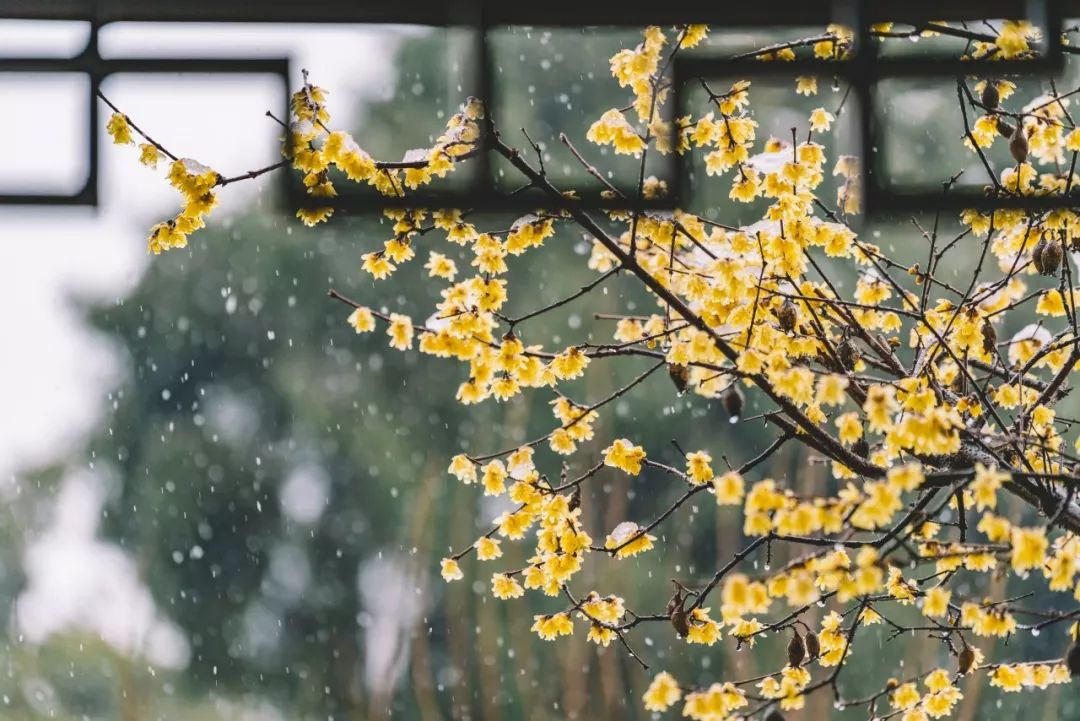 100句雪诗词,遇见最美冬天