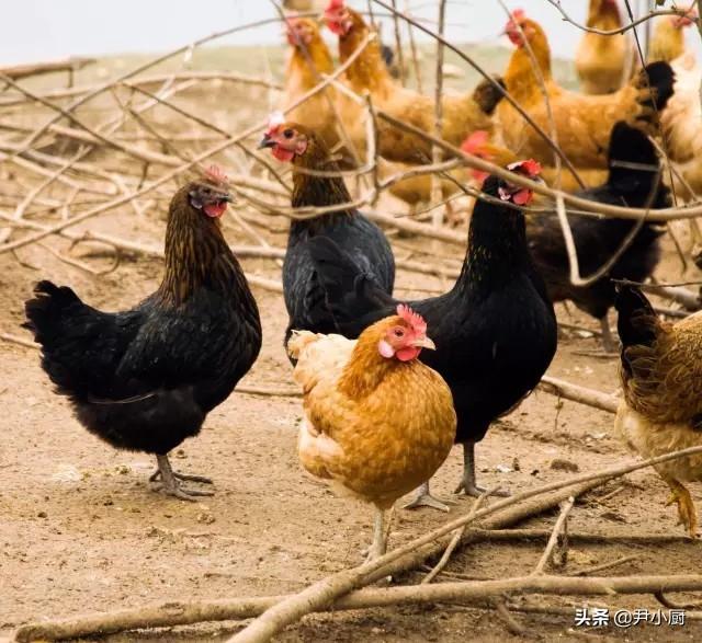 纸包肥肠鸡绝密配方 美食做法 第9张