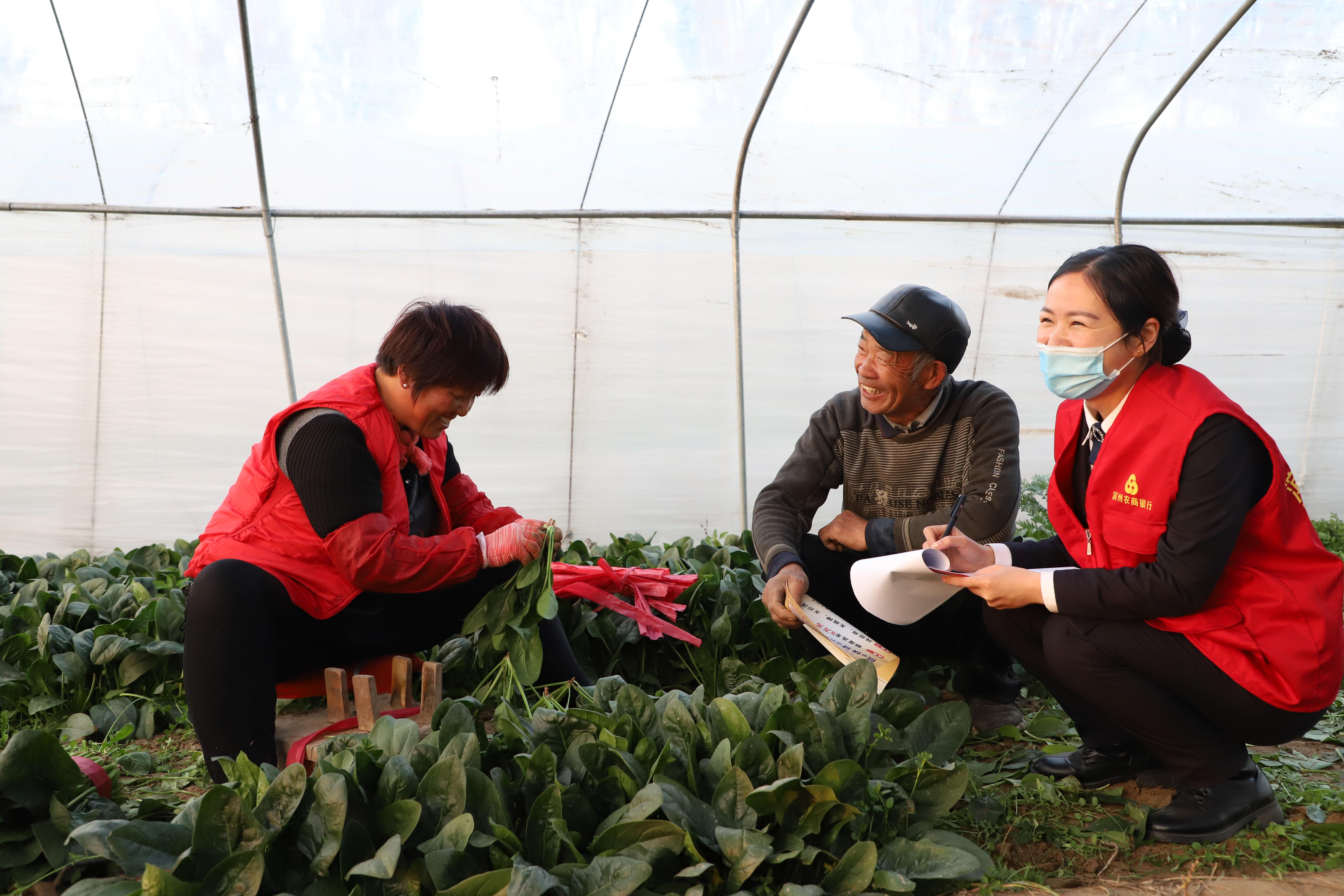 滨州农商银行党建聚力铺就乡村振兴致富路