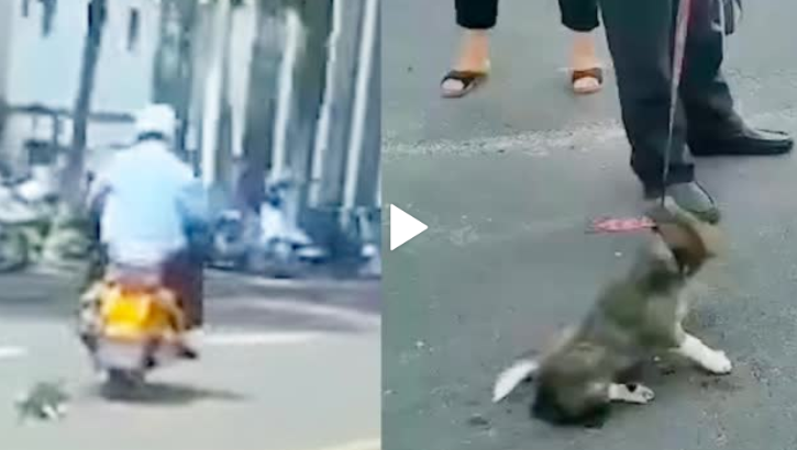 男子骑摩托拖行小狗 石狮公安连发五条微博说明:小狗已送医 男子被处罚