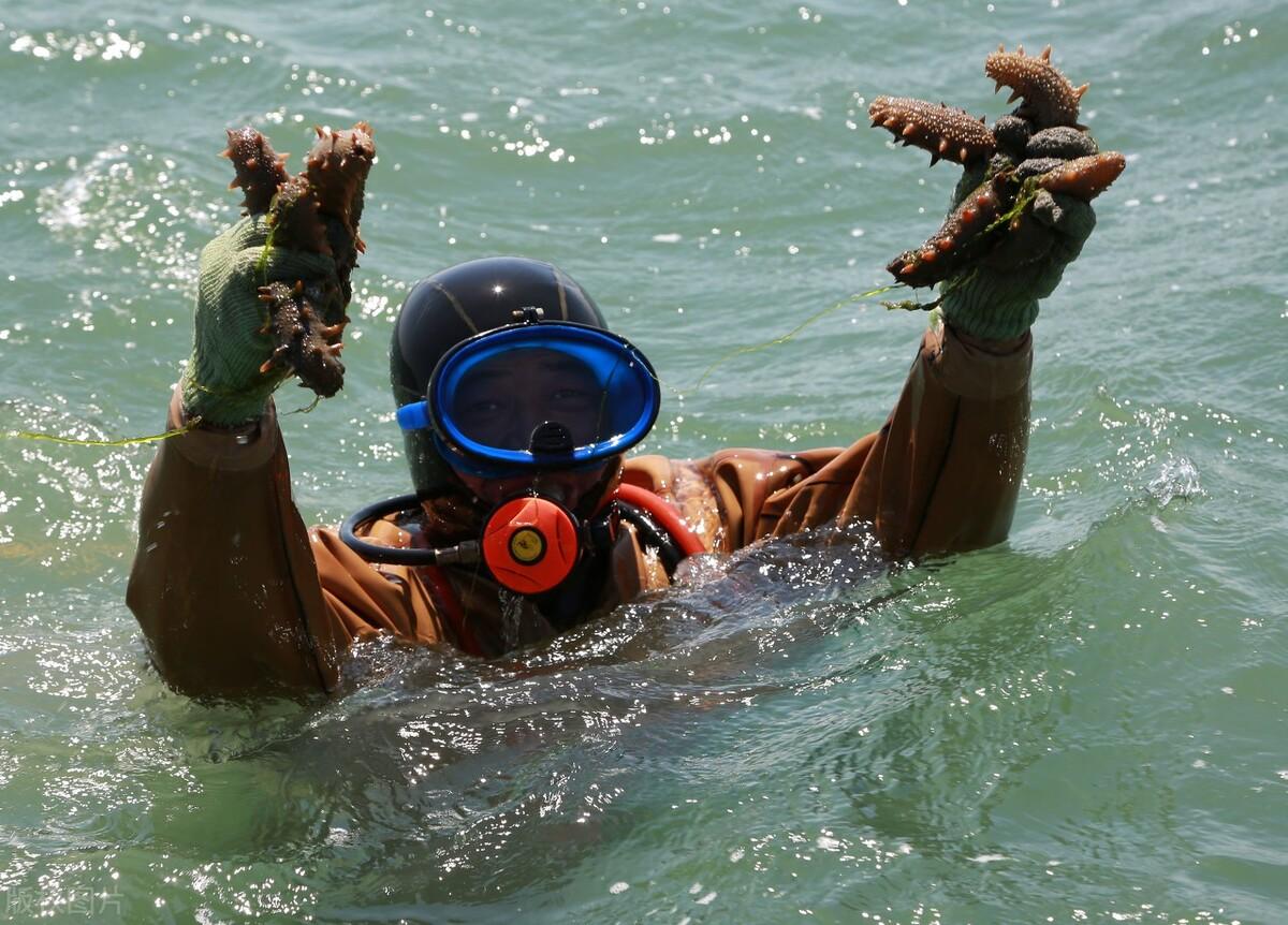 专家视点 王诗成:海参可强壮一个民族的体魄