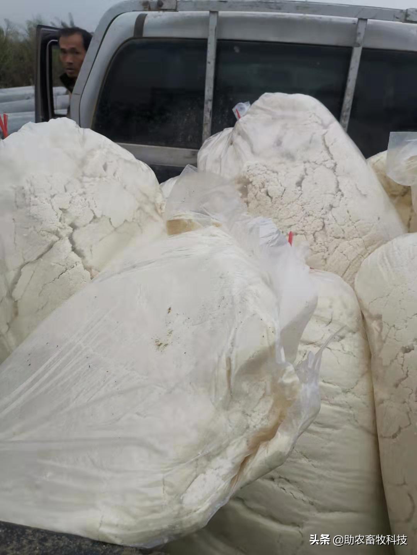 发酵豆渣养殖牛羊技术,变成营养丰富饲料降成本且可以长