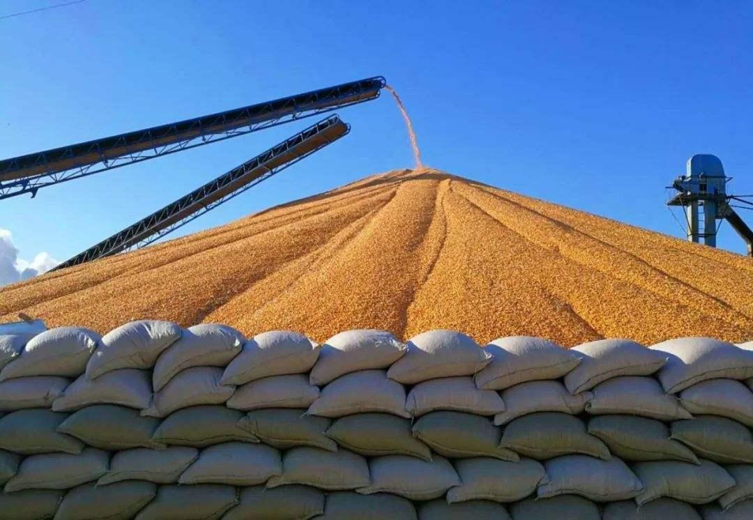 定向饲用稻谷销售疑被石锤 销售清单流出玉米价格再次全面下跌