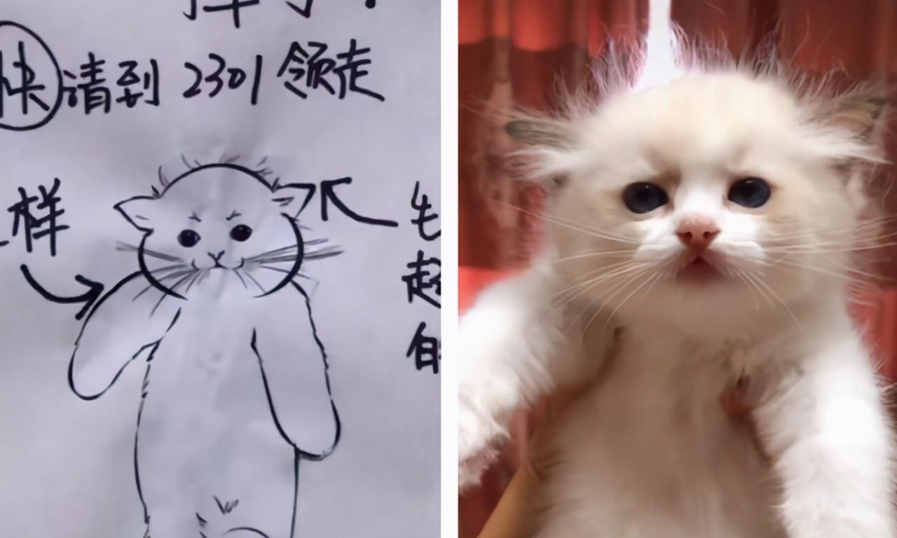"""邻居画的""""寻猫启事""""火了,自带密码锁,只有猫咪主人才能看懂"""