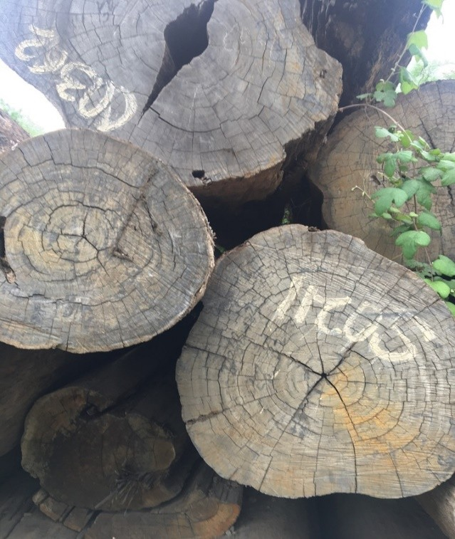 江苏扬州一批稀有所罗门大叶紫檀木,900立方米400多万元起拍-识物网 - 中国商业零售品牌知识门户