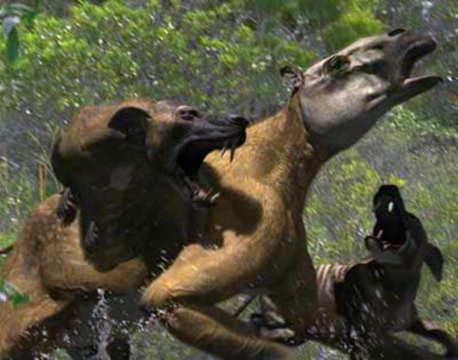 科普-巨豺齿兽