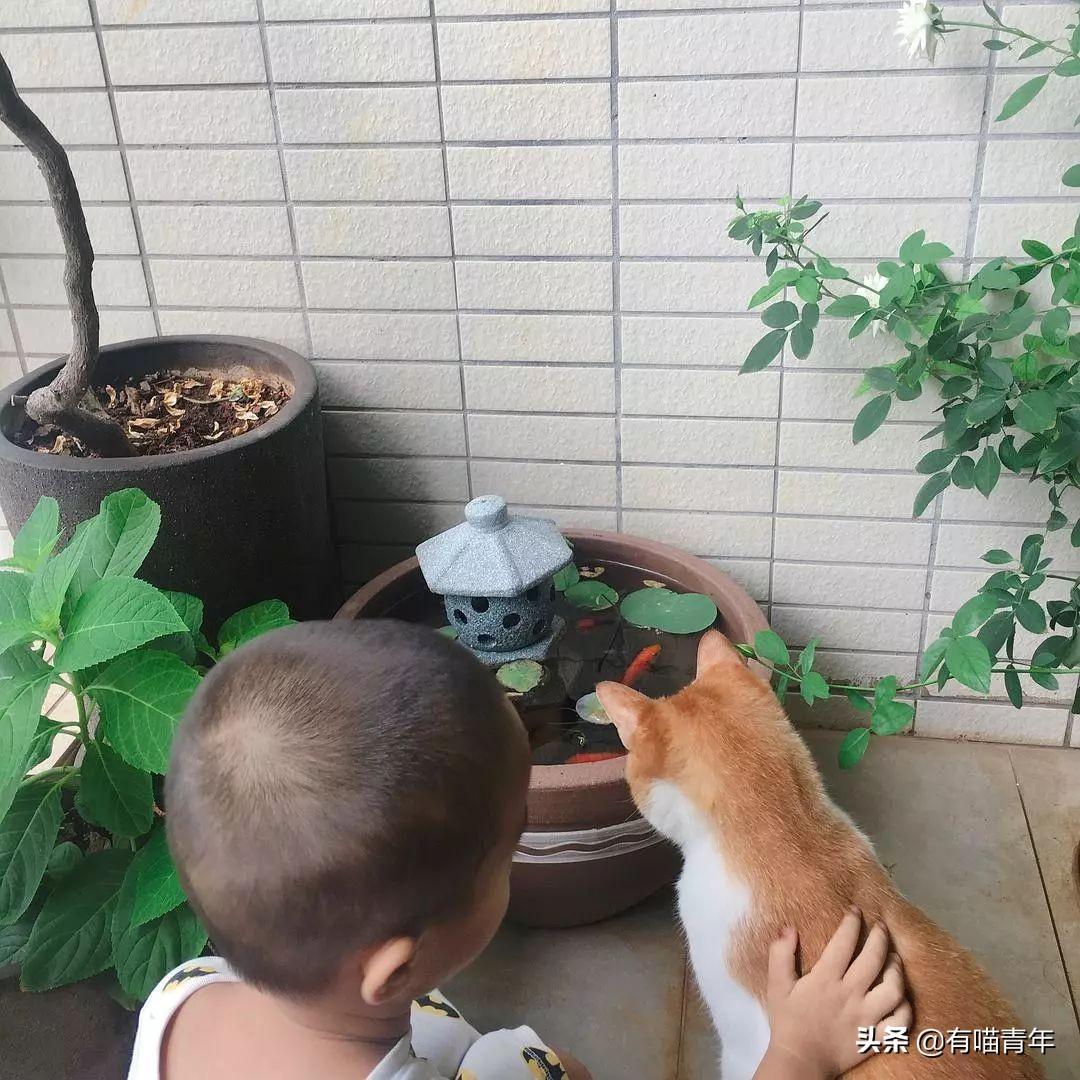 猫和人类幼崽的迷惑行为,笑出鹅叫