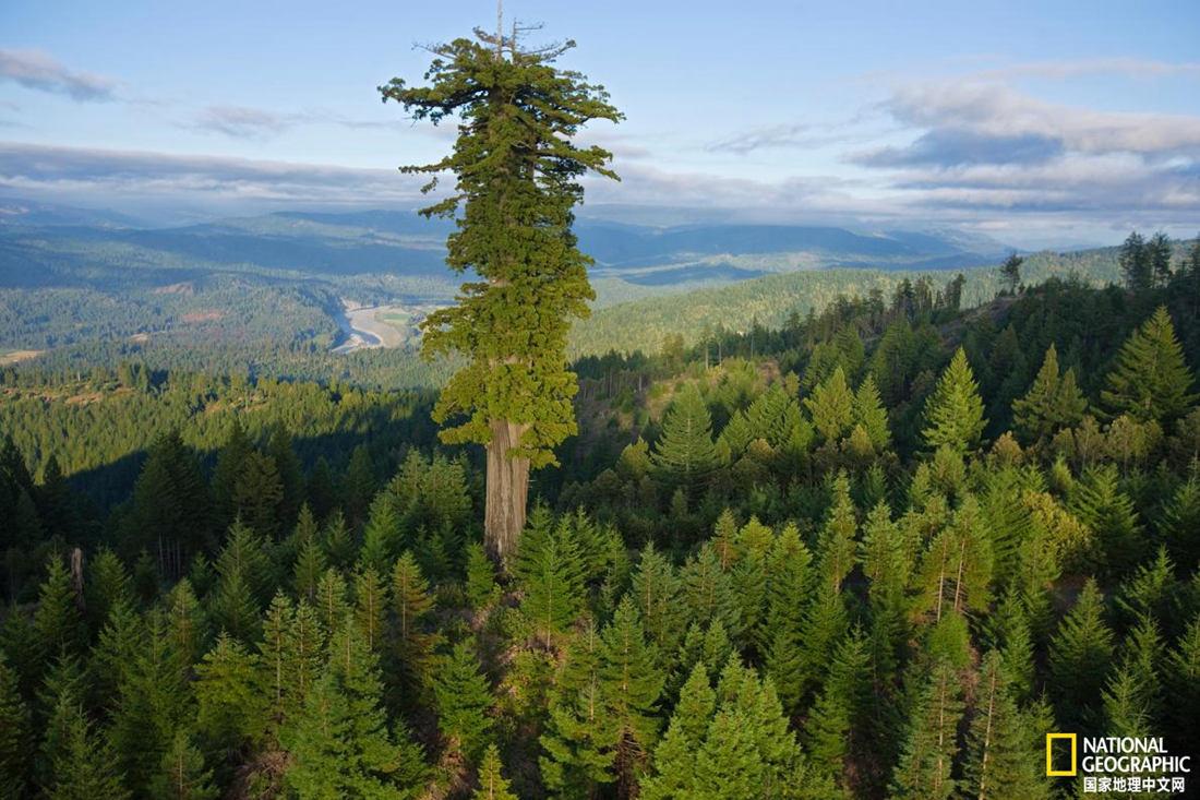 這些神奇的樹木,你最喜歡哪一個?
